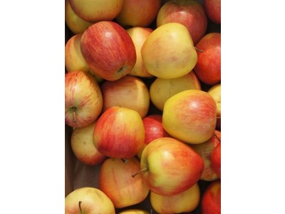 Jablká odroda PINOVA