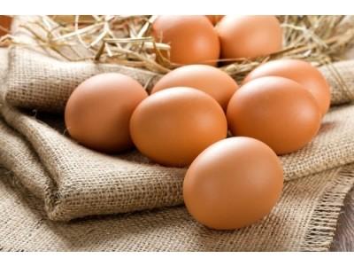 Slepačie vajcia XL